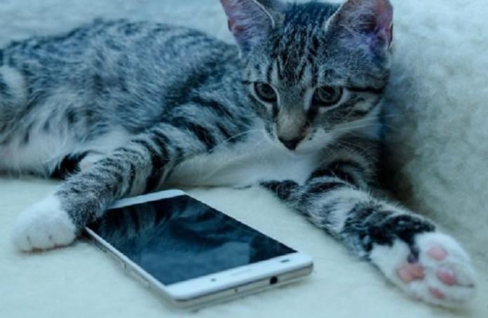 Crean una app para traducir los maullidos de los gatos