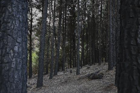 Por qué se declaró la Emergencia y Desastre Agropecuario y Forestal en Bariloche