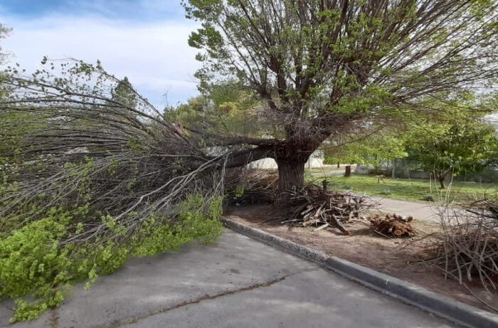 Amplio operativo municipal en las calles por el alerta de vientos